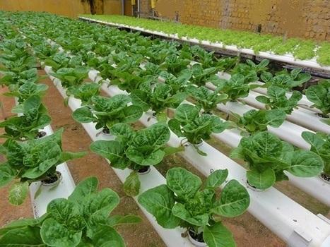 Green technology used to create huge indoor farm in Japan - Hydrogen Fuel News | Cityfarming, Vertical Farming | Scoop.it