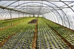 Global Agricultural Films Market Worth $7.1 Billion by 2017 | Agricultural & Horticultural Industry News | Scoop.it
