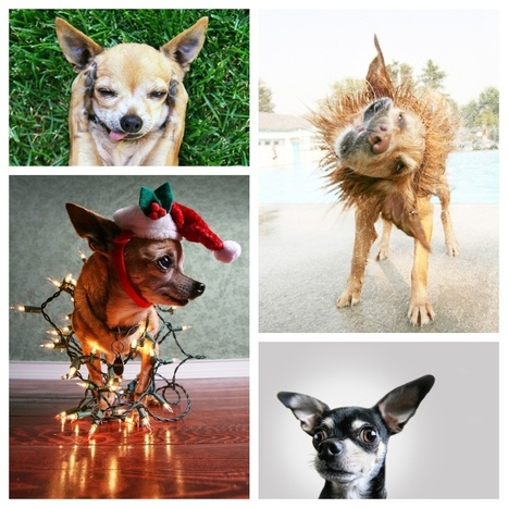 Animal Attraction: 5 Tips for Phenomenal Pet Photography | Photography Tips & ideas | Scoop.it