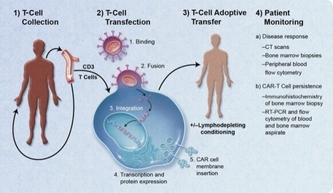 CAR T-Cell Therapies: Positive Early Results - Clinical Oncology News | Immunology and Biotherapies | Scoop.it