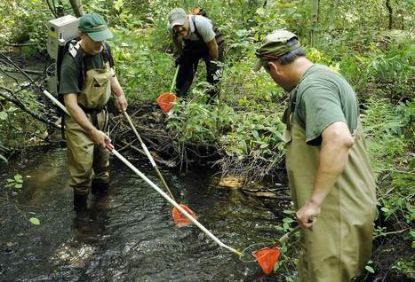 State fish habitats assessed - Worcester Telegram | Fish Habitat | Scoop.it