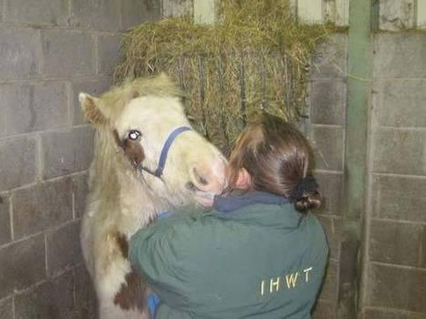 Orphaned foal now in care of Irish charity | Horses  around the world | Scoop.it