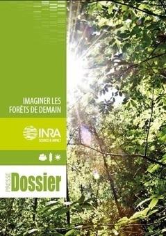 INRA - Imaginer les forêts de demain   Innovation Agro-activités et Bio-industries   Scoop.it