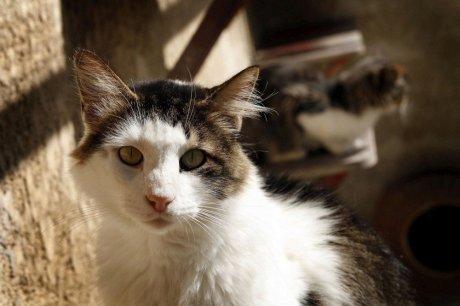 Boulazac (24) : un chat sous le capot, le vétérinaire intervient | Mikan : le soin animal | Scoop.it