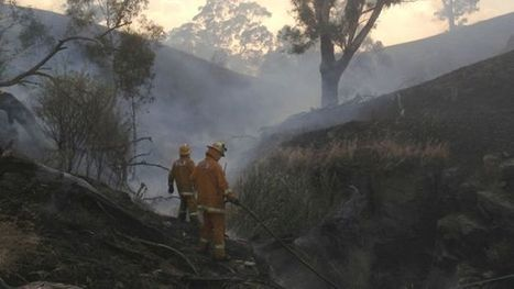 Tens of thousands of animals die in fires   Climate change challenges   Scoop.it