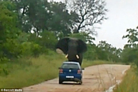 Terrifying Elephant Attack in South African Safari Park | Worldwide News | Scoop.it
