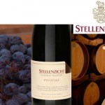 Stellenzicht Harvesting Gold Again | The Wine Glass | Scoop.it