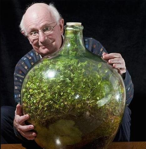 Plant survives 50 years locked in a bottle | GO Sustainable GO Versatile | Scoop.it