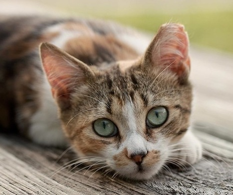 Project Catnip Aims to Take Trap, Neuter, Return Programs Global | Cats Meow | Scoop.it