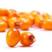 Try Sea Buckthorn Oil for Mouth Ulcers | Sea Buckthorn | Scoop.it