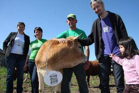 Ouest-France - Le canular des vaches à QR codes devient réalité | QRdressCode | Scoop.it