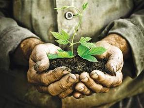 LOCAL - Judge sentences petty criminals to plant trees: Report | Radio Show Contents | Scoop.it