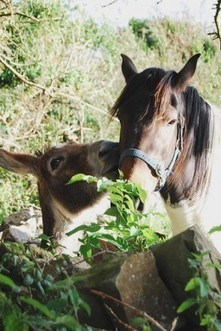 A True Story of Friendship of a Donkey and Horse. | Odds and Ends | Scoop.it