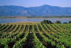 Baisse du nombre d'exploitations viticoles. | Vins et Vignerons | Scoop.it