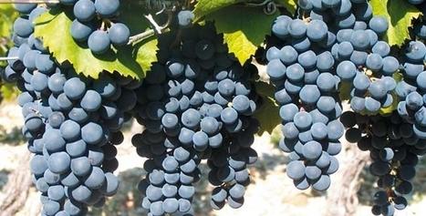 Les vins naturels font leur salon à Grenoble ! - Le Figaro L'Avis du Vin | vin naturel | Scoop.it