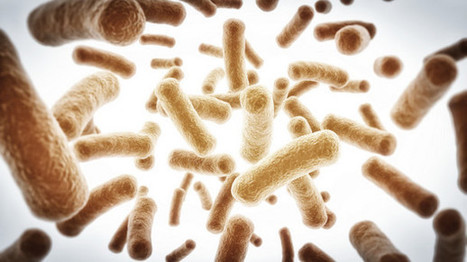 Bifidobacterium probiotic shows metabolic and anti-obesity benefits: RCT | Cardiovascular Disease: PHARMACO-THERAPY | Scoop.it