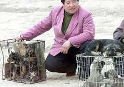 Chinese woman pays to rescue 100 dogs from meat festival: report   ANONYMOUS RHINO WARRIOR   Scoop.it