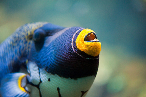 Coral Reefs: 35 Beautiful Species to Adore | My Funny Africa.. Bushwhacker anecdotes | Scoop.it