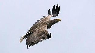 Tweet from @FenianWallace   British Birds of Prey   Scoop.it