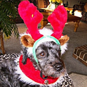 Bunny's Blog: Puppies are not Stocking Stuffers, Tips for a Safe Holiday Season with Your Dog | Pet News | Scoop.it