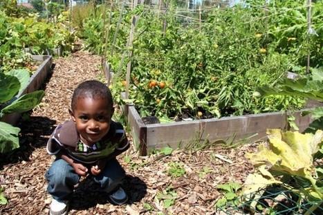 Acta Non Verba Youth Farm Project Celebrates Summer in Oakland | School Gardening Resources | Scoop.it