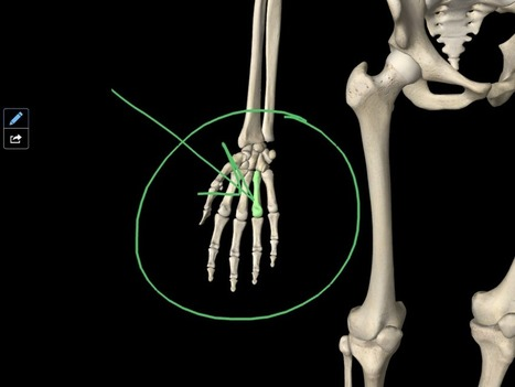 Essential Skeleton 3D | PE Anatomy and Exercise Physiology | Scoop.it