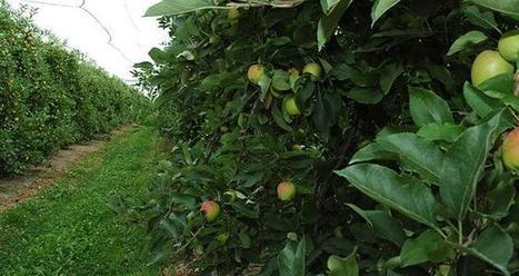 Porte-greffe: qui sont les petits nouveaux? | L'Arboriculture fruitière | HORTICULTURE BOTANIQUE | Scoop.it
