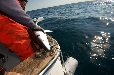 Is Sustainable-Labeled Seafood Really Sustainable? - KQED | Nova Scotia Fishing | Scoop.it