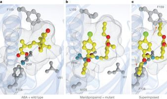Agrochemical control of plant water use using engineered abscisic acid receptors : Nature | Hormones in Plant Development | Scoop.it