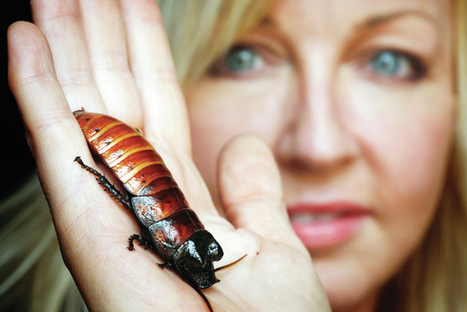 From icky bugs to good grubs - Jacksonville Journal Courier | BUSINESS DEVELOPMENT | Scoop.it