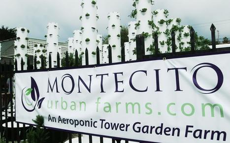 Vertical farming satisfies demand for local produce - Al Jazeera America (blog)   Aquaponics   Scoop.it