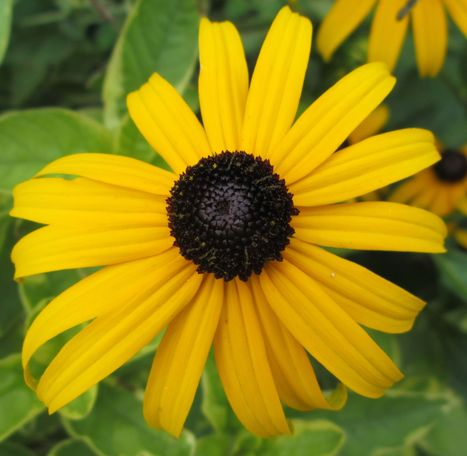 Black-Eyed Susan Picture Books 2014-15 | Black-Eyed Susan Picture Book Nominees 2014-2015 | Scoop.it