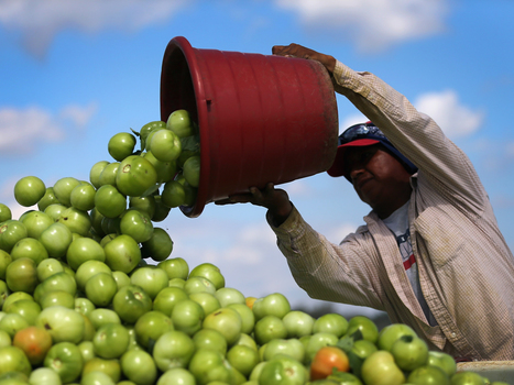 When You Waste Food, You're Wasting Tons Of Water, Too : NPR | Sustain Our Earth | Scoop.it