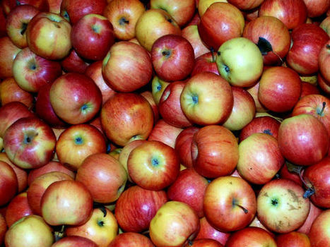 NC Apple crop hurting though local crops appear okay | WBTV | North Carolina Agriculture | Scoop.it