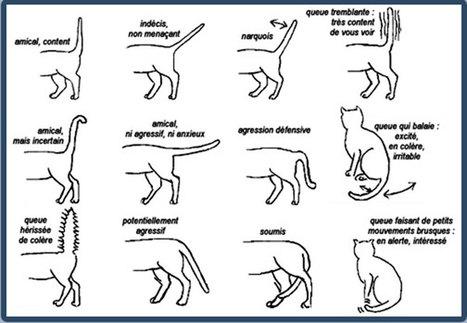Apprenez à mieux communiquer avec les chats en décodant tous leurs comportements | Chronique d'un pays où il ne se passe rien... ou presque ! | Scoop.it