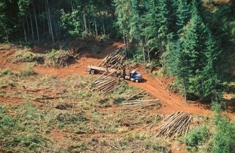 Más allá de la deforestación: la restauración de ecosistemas ... - El Ciudadano (Chile)   COMO ES EL TEMA DE LA SUSTENTABILIDAD   Scoop.it