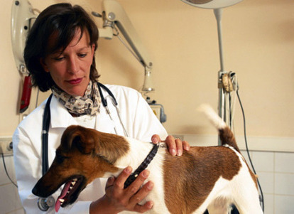 Howell Michigan Veterinary Services: Providing Best Health Check   Health and Beauty   Scoop.it