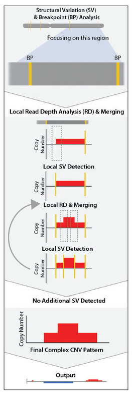 Techniques for Assessing Genomic Copy Number Variations | The Scientist Magazine® | Longevity | Scoop.it