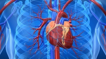Immune system discovery could lead to a vaccine for heart disease | Longevity science | Scoop.it