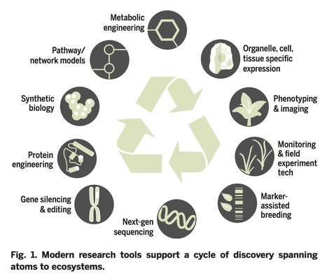 The next green movement: Plant biology for the environment and sustainability,http://science.sciencemag.org/content/353/6305/ | SEED DEV LAB Biblio | Scoop.it