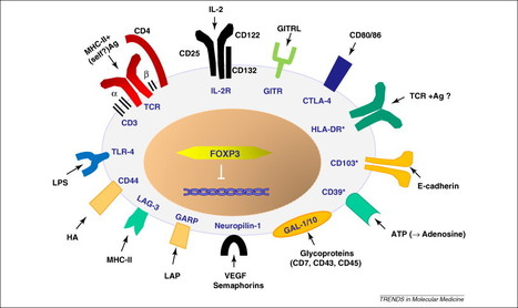 Critical Immune System Control Mechanism Discovered   Amazing Science   Scoop.it