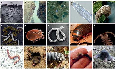 Vous n'imaginez pas à quel point les organismes vivant sous vos pieds influent sur votre vie | EntomoNews | Scoop.it