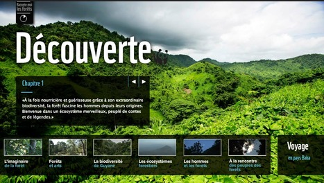 "Web Documentaire ""Raconte-moi les forêts"" - WWF 