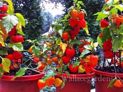 Pumpkin Lanterns! A wonderful way to illuminate... | Wallace Gardens | Annie Haven | Haven Brand | Scoop.it