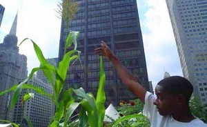 How Urban Farming Can Transform Our Cities — And Our Agricultural System | Vertical Farm - Food Factory | Scoop.it