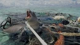 Los océanos 'ninguneados' | Planeta Tierra | Scoop.it