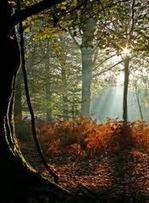 Diversidad de ecosistemas, tipo de biodiversidad - | Turismo Sustentable | Scoop.it