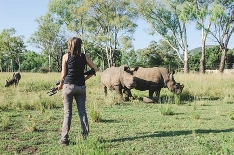 The rhino bush war and the horn trade | What's Happening to Africa's Rhino? | Scoop.it