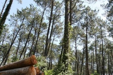 Les acteurs de la forêt ouvrent des pistes | Agriculture en Dordogne | Scoop.it