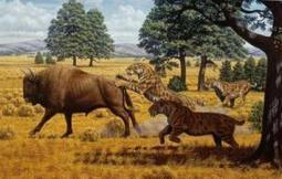 Evidence contradicts idea that starvation caused saber-tooth cat extinction | Nature enviroment and life. | Scoop.it